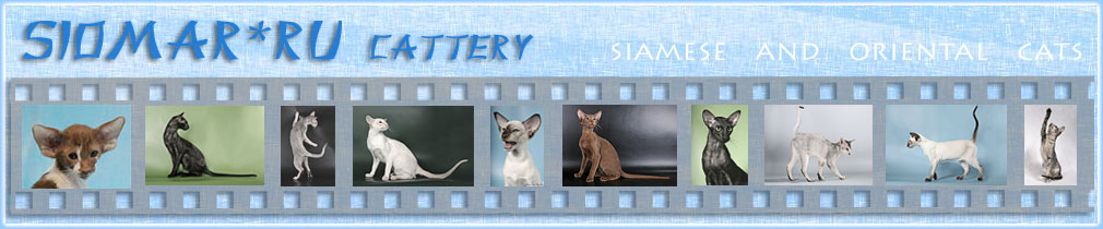 �������� ������ - �������� � ������������ ����� | SIOMAR cattery - siamese and orientals shorthair cats